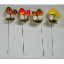 Ciuperci GZ0027-1,3,5,9A
